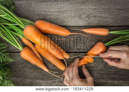 Female cuts fresh carrot with green tops on wooden table. Copy space for your text. From above.