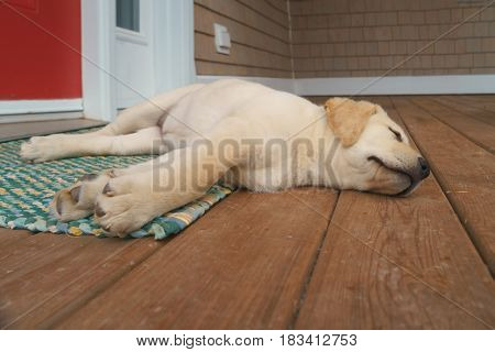 Yellow Labrador retriever puppy on a front porch.