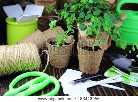 the seedlings in the peat pots with the garden tool