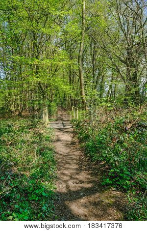Narrow pathway in the woods in Springtime with new growth and lovely light.