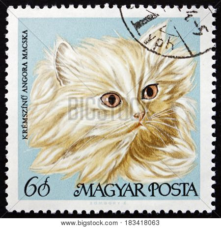 HUNGARY - CIRCA 1968: a stamp printed in Hungary shows Cream Persian Domestic Cat circa 1968