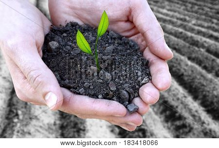 Concept Of Fertility And Ecology. Close Up Of Hands Holding Small Plant In Soil  Over Black Ground P