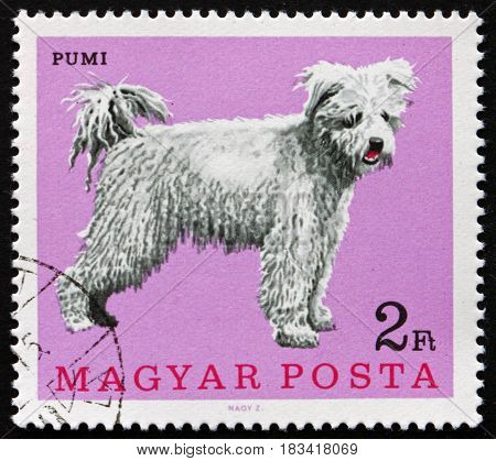 HUNGARY - CIRCA 1967: a stamp printed in Hungary shows Pumi Hungarian Sheep Dog circa 1967