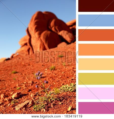 Wildflower in Monument Valley, in a colour palette with complimentary colour swatches.