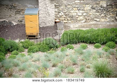 A bee box stands in the middle of a garden area with beds of green plants.