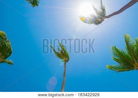 Summer sunny beach with tropical palm trees under blue sky
