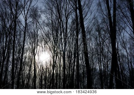 Jungle forest trees with leafless bald branches sunlight comes behind in the afternoon gives a mystic effect nature winter autumn photo background