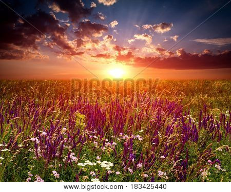 Sunset over wild flowers meadow in steppe
