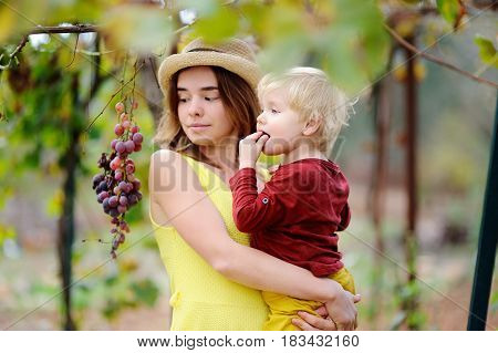 Young Beautiful Girl And Little Child Picking Mellow Grape In Sunny Day In Italy