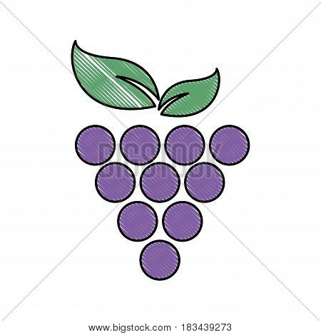 grape fruit fresh food image vector illustration desing