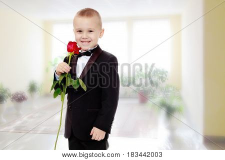 Beautiful little boy in a strict black suit , white shirt and tie.Boy holding a flower of a red rose on a long stem.In the Montessori room the children's garden where there are shelves.