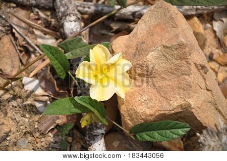 Wild Flowers At Forest