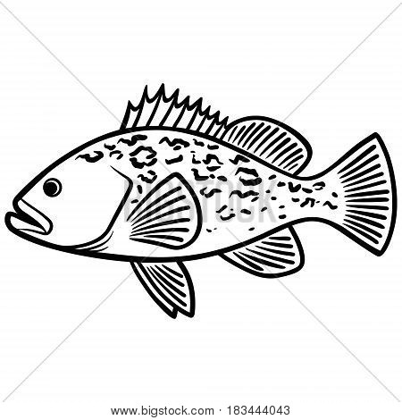 A vector illustration of a Grouper fish.