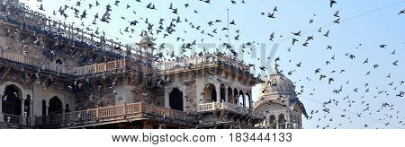 Pigeons flying in droves over the City Palace Jaipur India