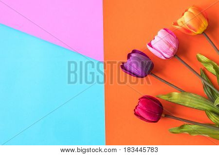 The colorful tulips on a colorful background.