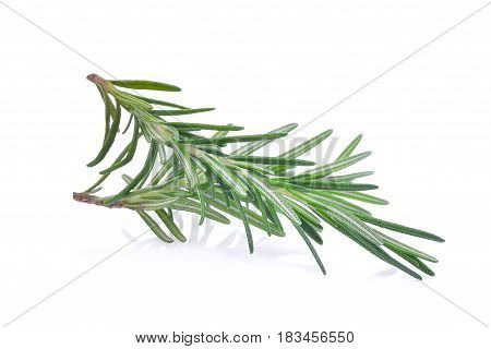 fresh rosemary isolated on the white bacground