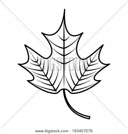 mapple leaf isolated icon vector illustration design