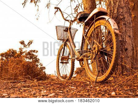 old bicycle style at summer near big tree beautiful landscape with sunset