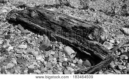 Rotten logs on the stones close-up .