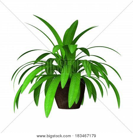 3D rendering of a green home plant isolated on white background