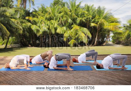 fitness, sport, yoga and healthy lifestyle concept - group of people making bridge pose over natural exotic background with palm trees