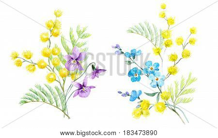 Beautiful illustration of hand drawn watercolor mimosa flowers