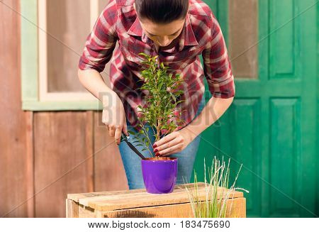 Young Gardener In Checkered Shirt Cultivated Plant In Pot On Porch