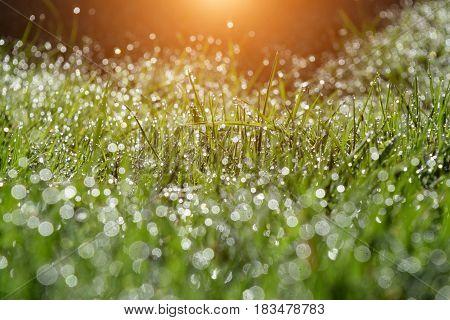 Idylic Summer Morning In Garden