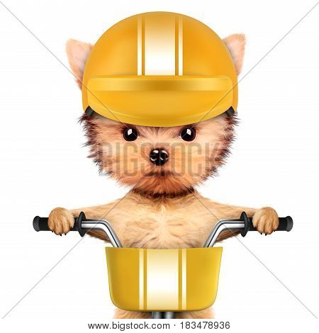 Funny racer dog sitting on a yellow bike and wearing helmet. Sport and championship concept. Realistic 3D illustration of yorkshire terrier with clipping path