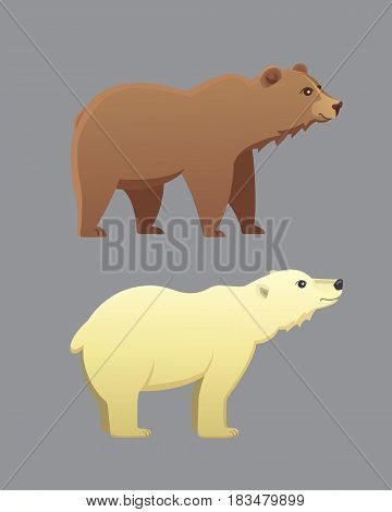 Collection with different cartoon bears isolated on grey background. Vector broun and white polar bear. Set Wildlife.