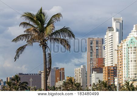Close up of palm trees against overcast city skyline in Durban South Africa