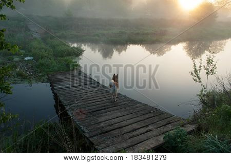 The Dog On The Bridge, The Old Dilapidated Bridge Over A River At Dawn, The Mist Over The Water,