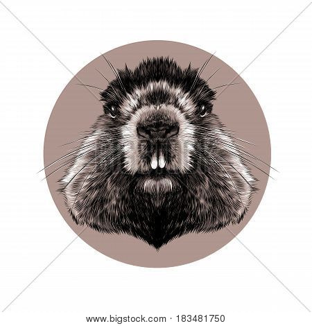 head Groundhog hairy symmetric sketch vector graphics black and white pattern on a brown background circle