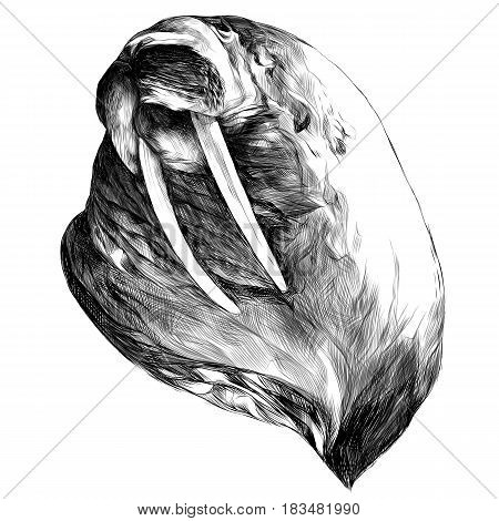 head walrus looking into the distance thick sketch vector graphics black and white drawing