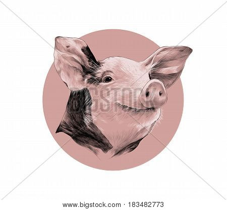 head of spotted pig sketch vector graphics black and white pattern on a background of pink circle