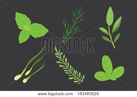 Set of drawing herbs and flowers, vector. Isolated herbs and spices.