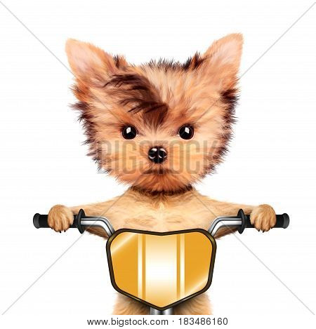 Funny racer dog sitting on a yellow bike. Sport and championship concept. Realistic 3D illustration of yorkshire terrier with clipping path