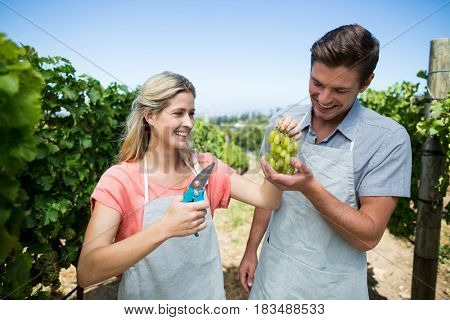 Happy couple holding grapes while standing at vineyard