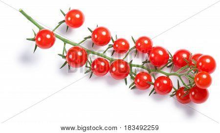 Tiny Tomatoes (solanum Pimpinellifolium) On Vine, Paths, Top View