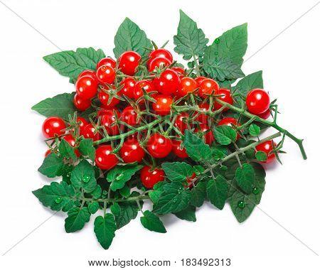 Tiny Tomatoes (solanum Pimpinellifolium), Paths, Top View