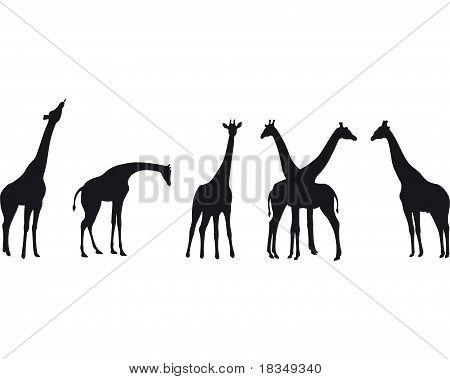 Giraffe Silhouette. Vector Set