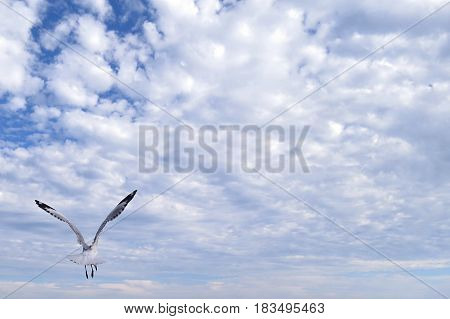 Seagull flying flies fly in blue clouded sky above Australian beach Summer days sea gull