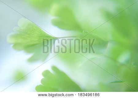 Abstract Abstract natural backgrounds. Eco nature green and blue abstract defocused background with sun shine natural backgrounds.