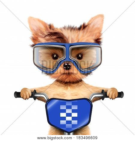 Funny racer dog sitting on a blue bike and wearing aviator goggles. Sport and championship concept. Realistic 3D illustration of yorkshire terrier with clipping path