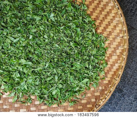 Drying Tea Leaves In The Bamboo Basket
