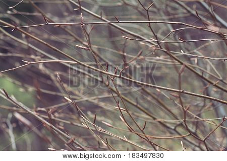 horizontal texture of tree branches with offspring in the spring selective focus