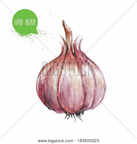 Hand drawn and painted watercolor green garlic. Isolated on white background. Vegetable illustration.