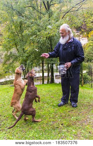 Gray-haired man feeding dogs at farm yard