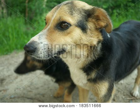 Closeup Portrait Of Mixed Breed Dog On Dark Background