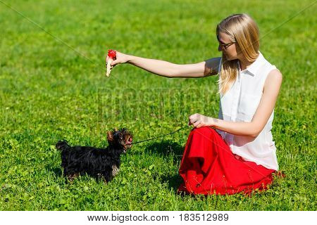 Dog and his owner - Cool dog and young women training in a park - Concepts of friendshippetstogetherness.